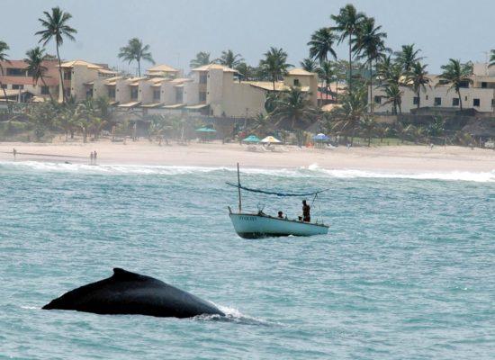 Praia balea